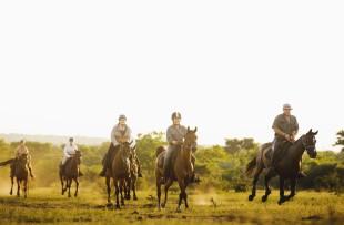 HorseSafari_079 (Large)