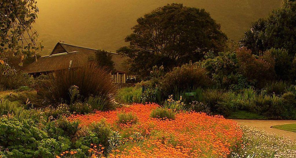 Kirstenbosch wiki5
