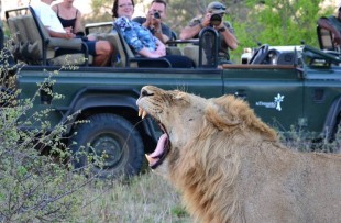 game drive africa on foot fb2