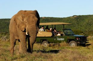 Shamwari Game Reserve Game drives