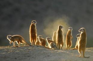 meerkats tswalu web3