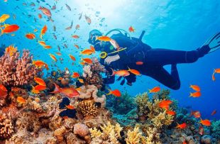 scuba-diving 724x426