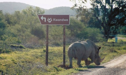 Self-drive safari : South Africa Holiday Architects