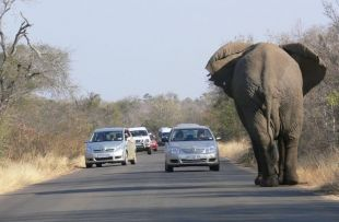 self drive sanparks fb
