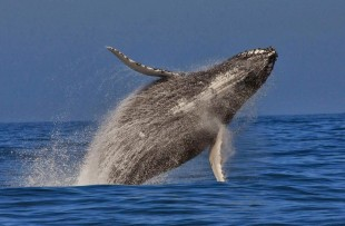 whalewatching oceansafaris.co.za2