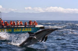 whalewatching oceansafaris.co.za4